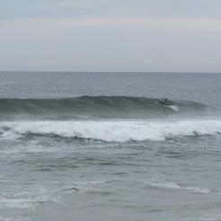 641 Delfin