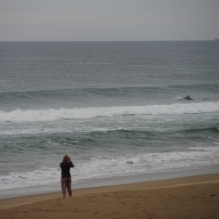 Delfine, Strand Santa Rita (2)