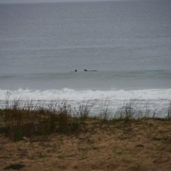 Delfine, Strand Santa Rita