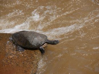 08 Schildkröte