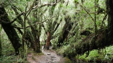 001 Bosque Encantado