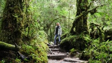 002 Bosque Encantado
