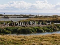 002 Parque Pingüino Rey