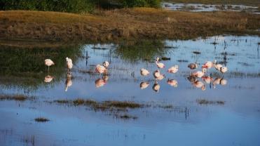 003 Flamingos im Lago Argentino