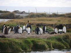 003 Parque Pingüino Rey