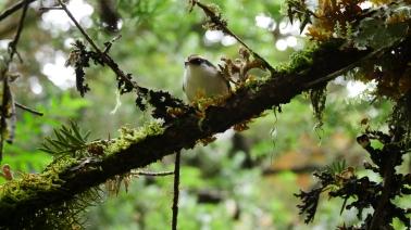 003 Vogel im Bosque Encantado