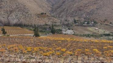 002 Valle del Elqui