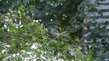 005 Vögel im Chaco