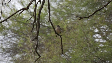 007 Vögel im Chaco