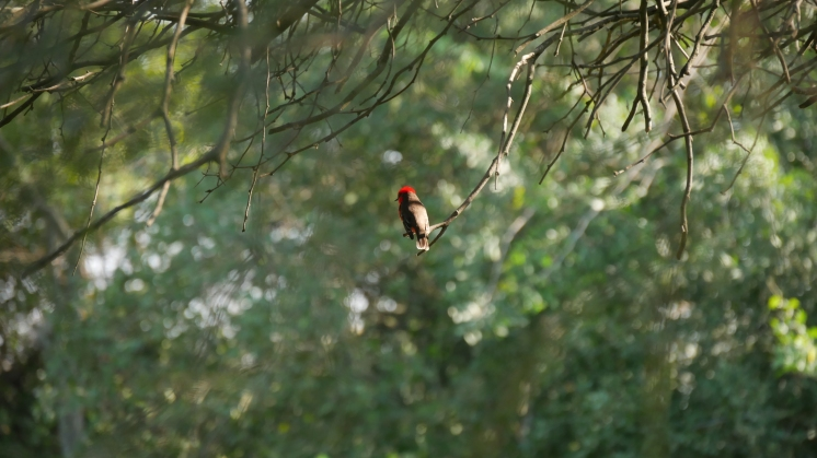 009 Vögel im Chaco