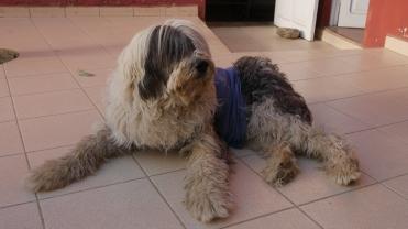 004-perro-locoto