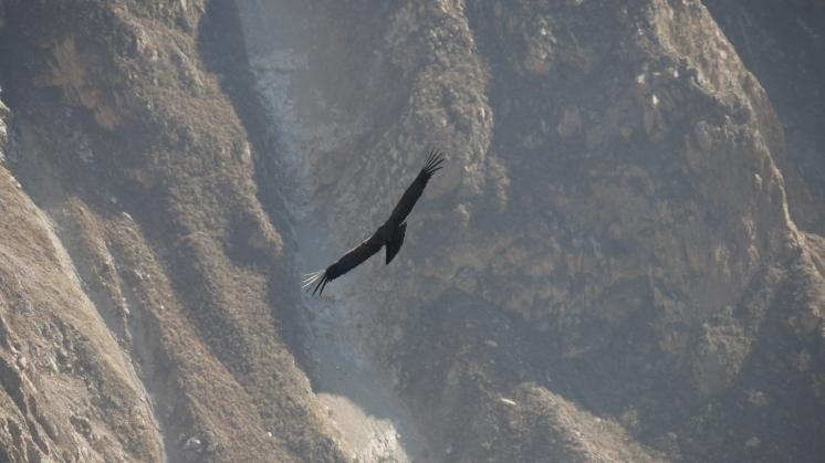 004-condor