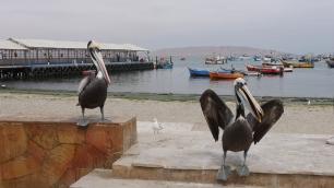 004-paracas-pelikane