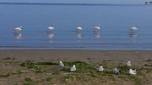 005-paracas-flamingos