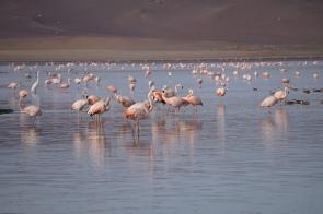 028-paracas-flamingos