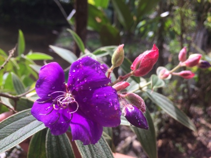 004-pflanzen-in-puyo