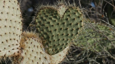 013-kaktusherz