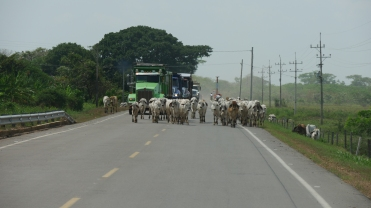 005 unterwegs nach Mompós
