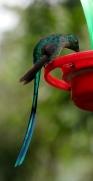007 Kolibri im Valle del Cocora