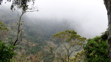 009 Nebelwald Valle del Cocora