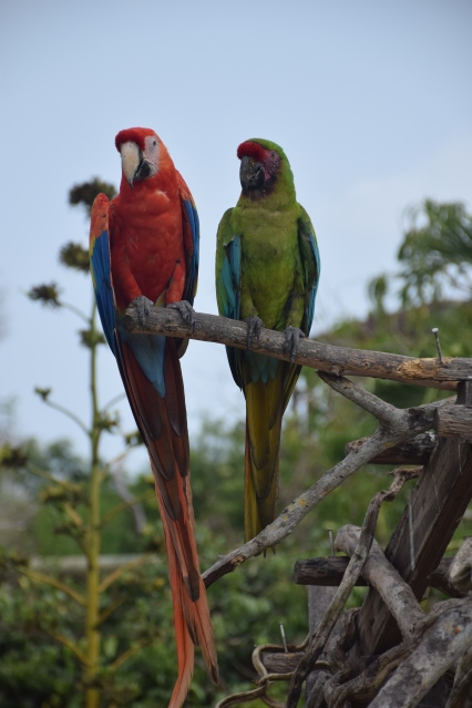 03 Aviario Nacional Isla Barú