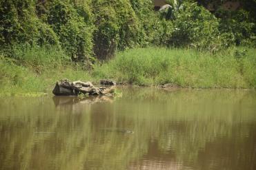 05 Fluss mit Kaimanen