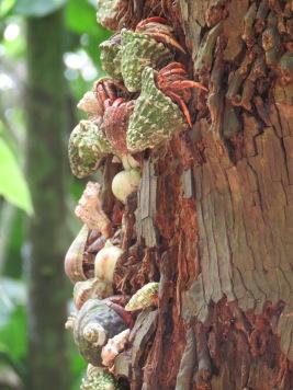 005 Krebse im Baum