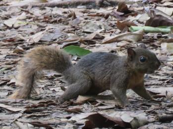 006 Eichhörnchen