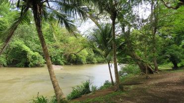 008 Krokodil im Fluss