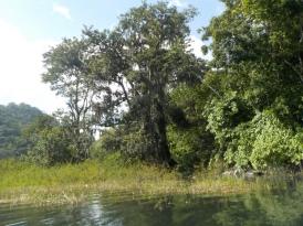 001 mit dem Kajak auf dem Lago Yojoa