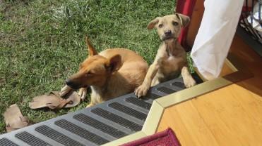 004 Hunde Camping Casa de Cristal