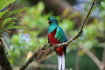 Quetzal_La Tigra