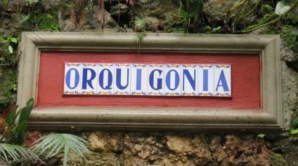 001 Orquigonia in Cobán