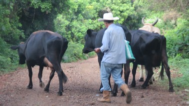 004 Bauer mit Kühen beim Vulkan Ipala