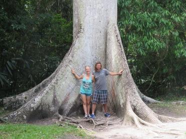 011 Ceiba Baum