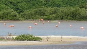 003 Flamingos in Chuburná Puerto