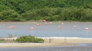 003 Flamingos in Chuburná Puerto