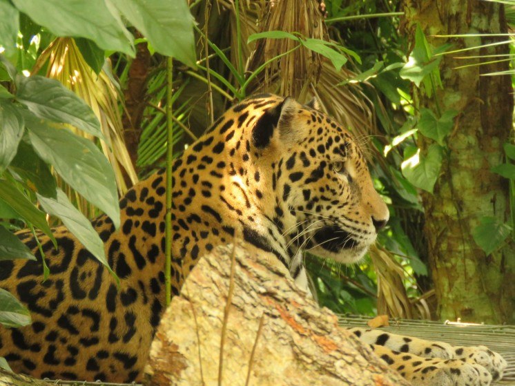 005 Jaguar