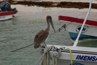 007 Pelikan Puerto Morelos