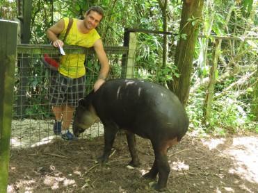 008 Tapir