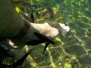 009 Cenote Cristalino