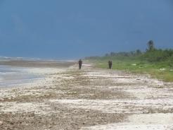 011 Strand in El Cuyo nach Hurrikan