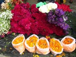 001 Blumen zum Tag der Toten