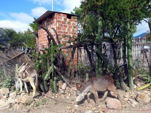 003 Valle de Oaxaca