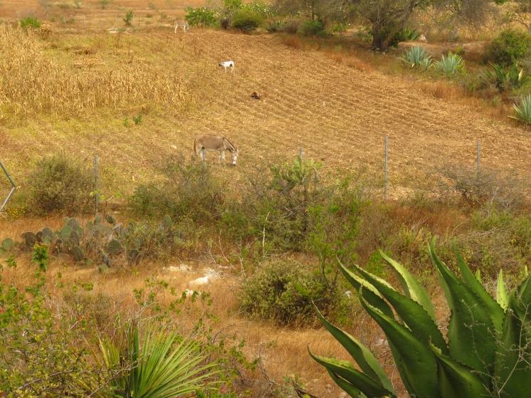 004 Valle de Oaxaca