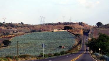 001 Agavenfelder im Bundesstaat Jalisco