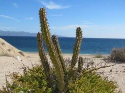 002 001 Baja California Sur